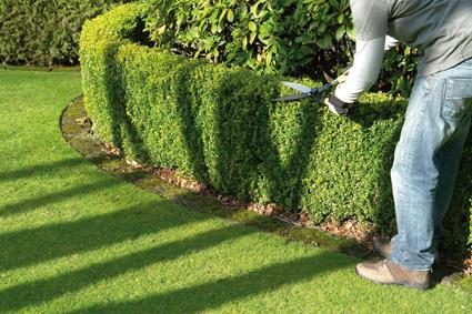 Entretien maison et d coration for Annonce entretien jardin