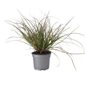 Décoration plante verte